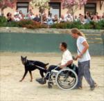 Countryranch köpek güzellik yarışması...
