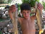 botan çayında elle balık yakalanıyur