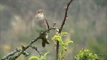 harika bir kuş sesi ruhunuzu dinlendirin...