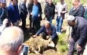 Çankırı ıldızım köyü baraj açılışı kurban kesimi...