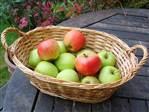 Amasya Elması Yeşil Yenice Bağları
